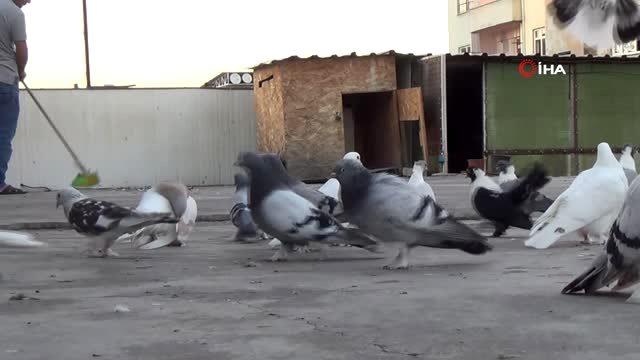 Uzmanlar uyardı, 'Beslediğiniz kuş türü katiliniz olabilir'