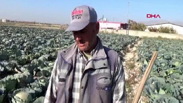 Niğde lahana fiyatı üreticiyi memnun etmedi