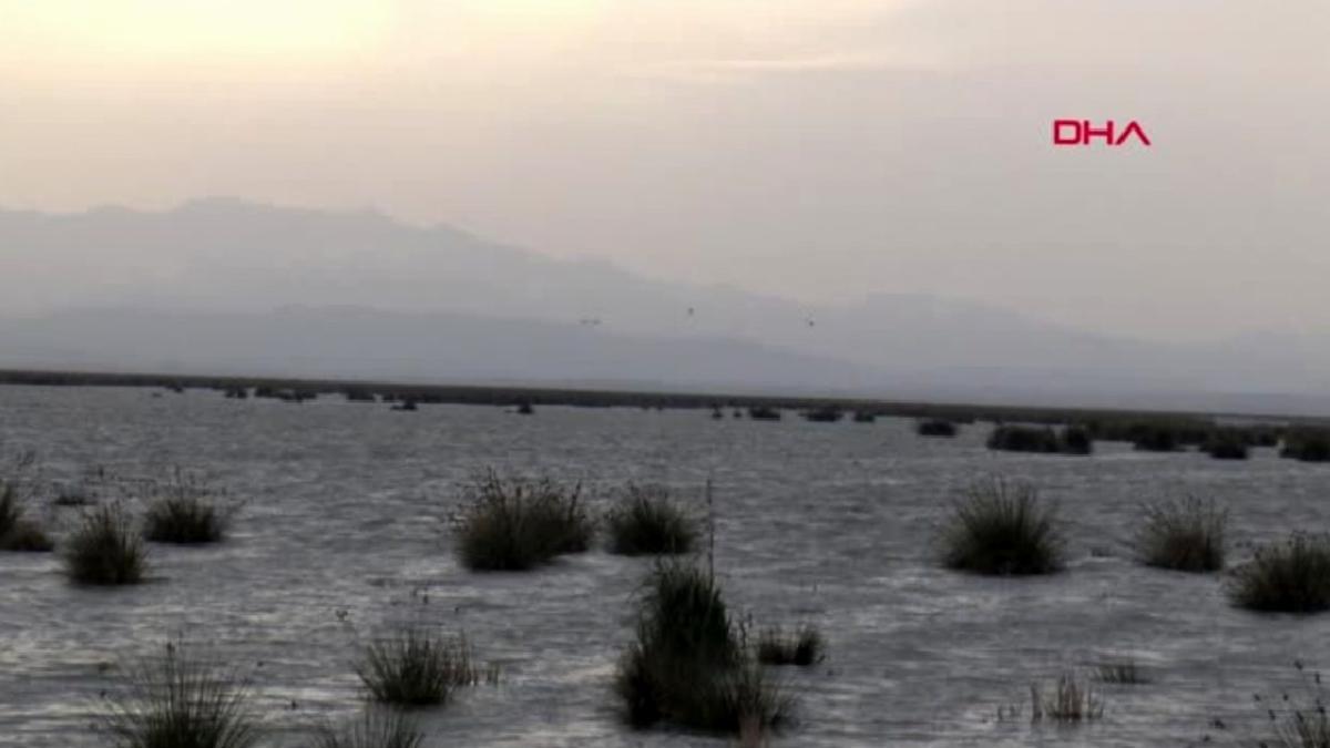 UNESCO Dünya Mirası Daimi Listesi'ne aday deltada, 359 kuş türü yaşıyor