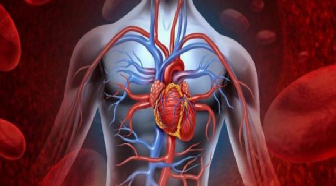 Covid-19'a karşı damar sağlığı neden önemli?