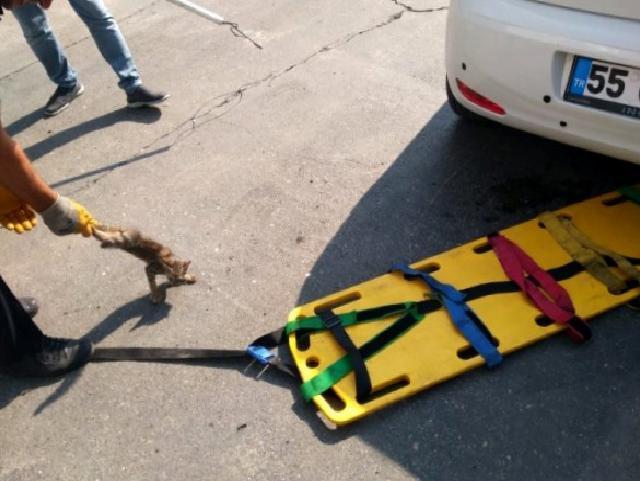 'Kedi kurtarma' operasyonu