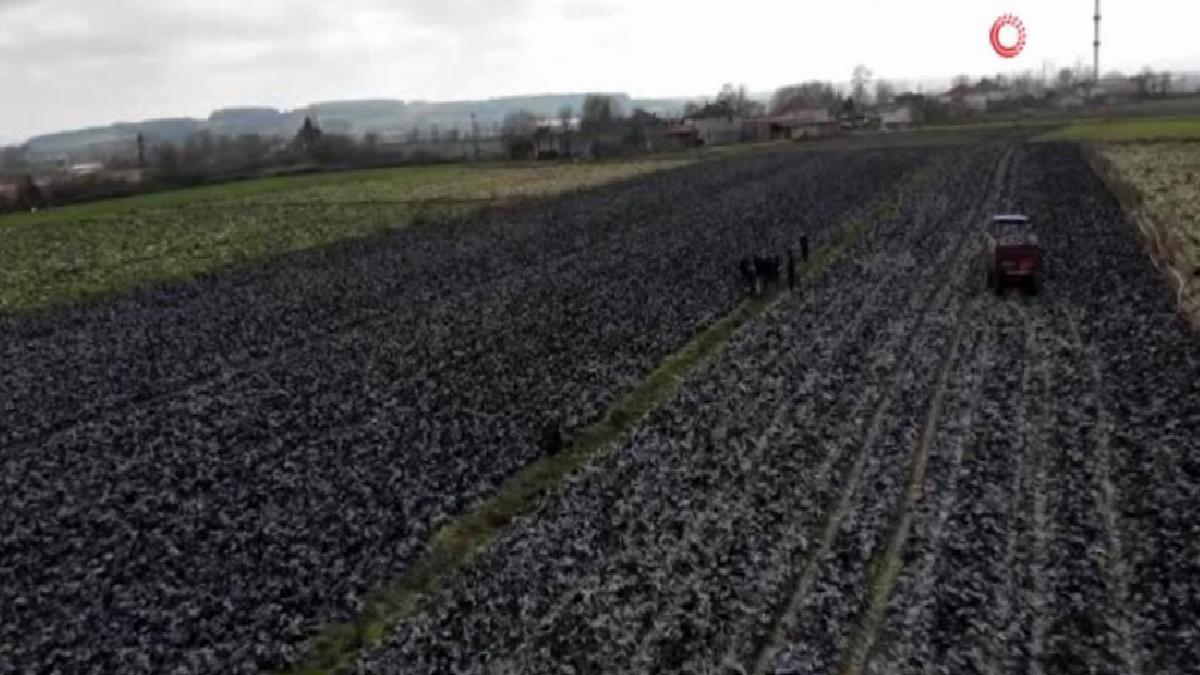 Samsun tarımsal üretimde zirveyi zorluyor