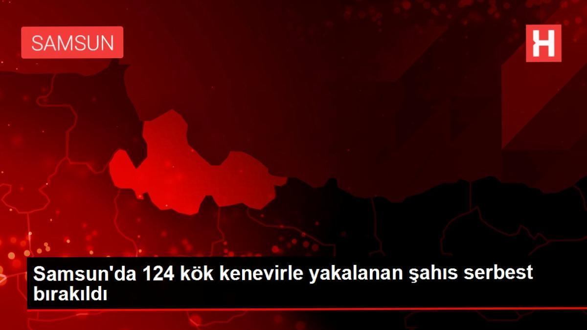Samsun'da 124 kök kenevirle yakalanan şahıs serbest bırakıldı
