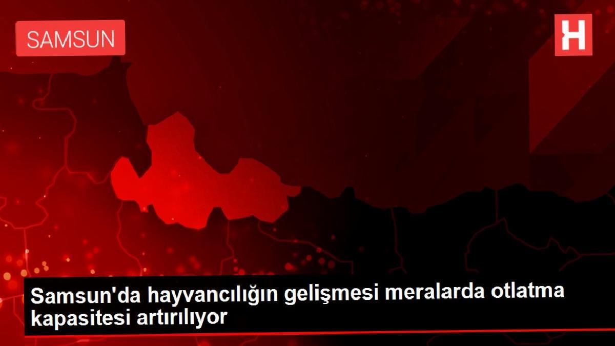 Samsun'da hayvancılığın gelişmesi meralarda otlatma kapasitesi artırılıyor