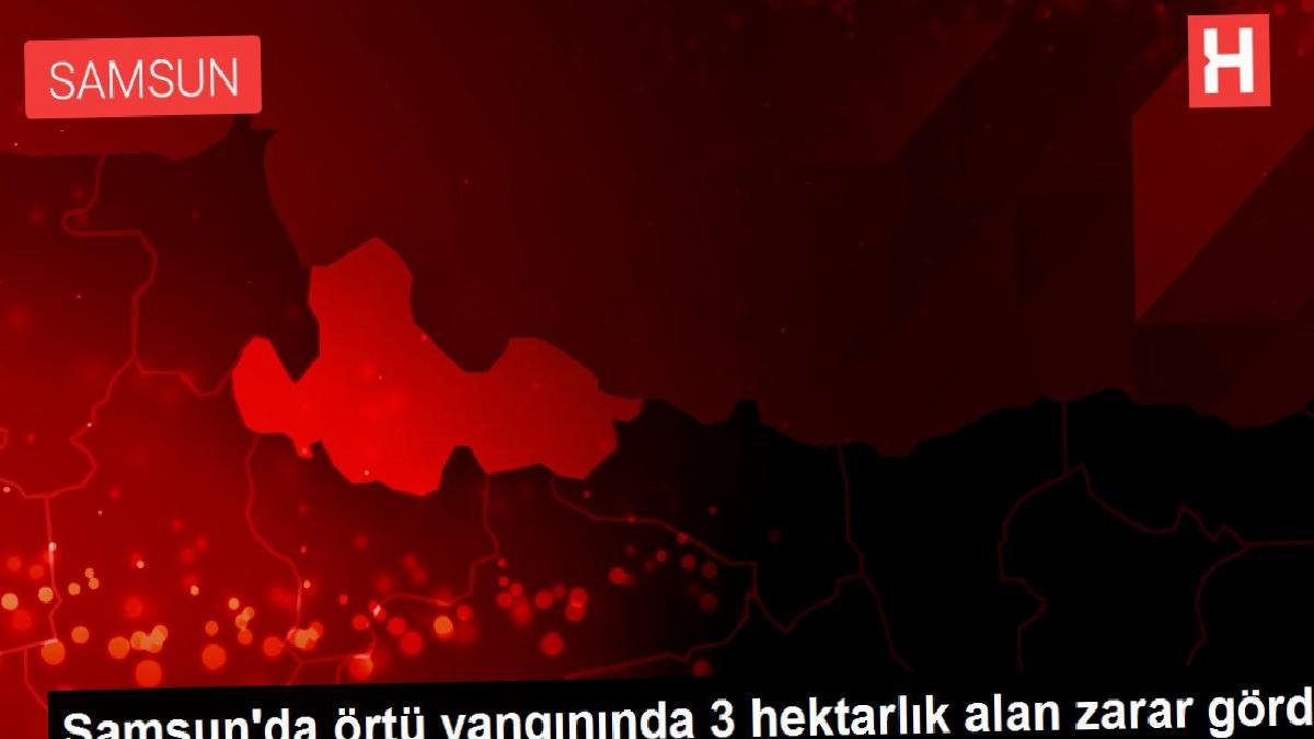 Son dakika haberi: Samsun'da örtü yangınında 3 hektarlık alan zarar gördü