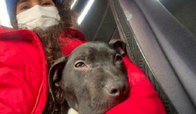 Son dakika! Sokakta bulduğu hasta köpeği ölümden kurtardı